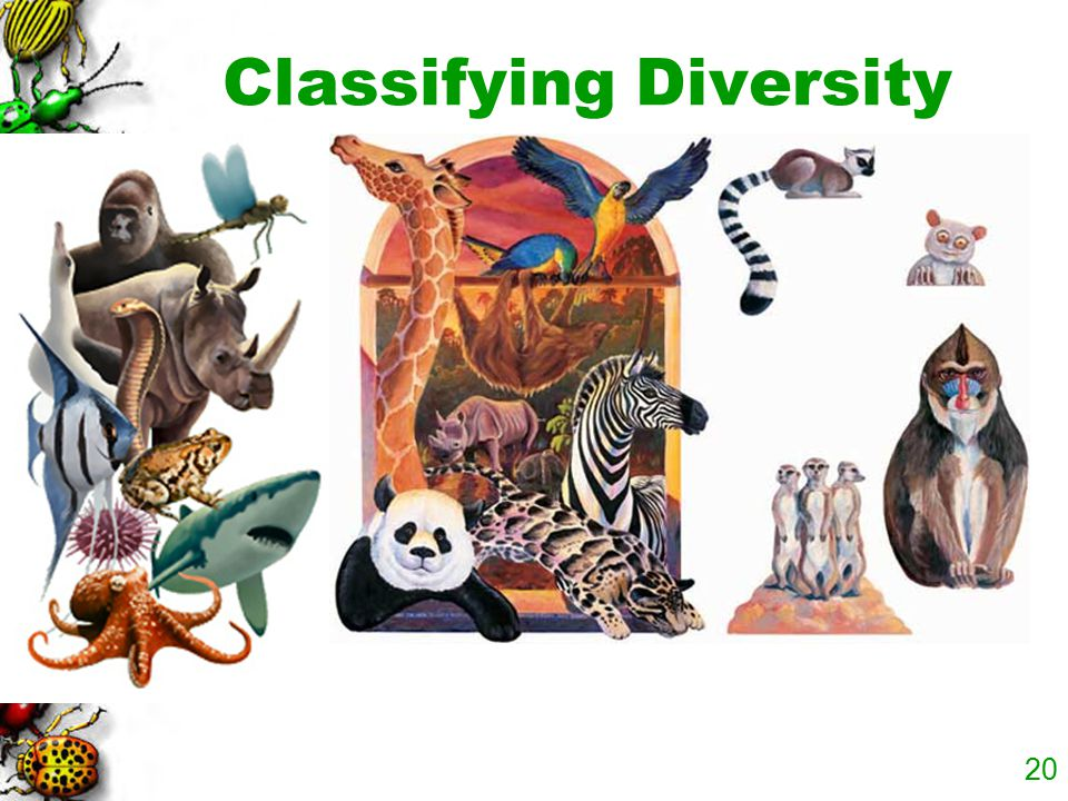 Classifying Diversity