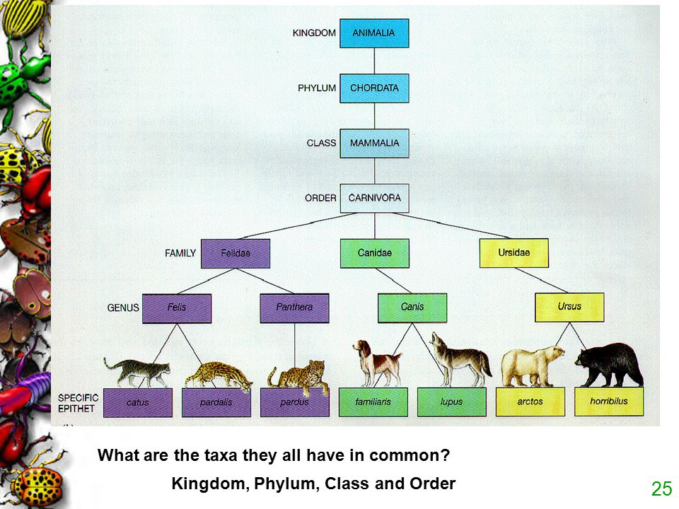 What are the taxa they all have in common
