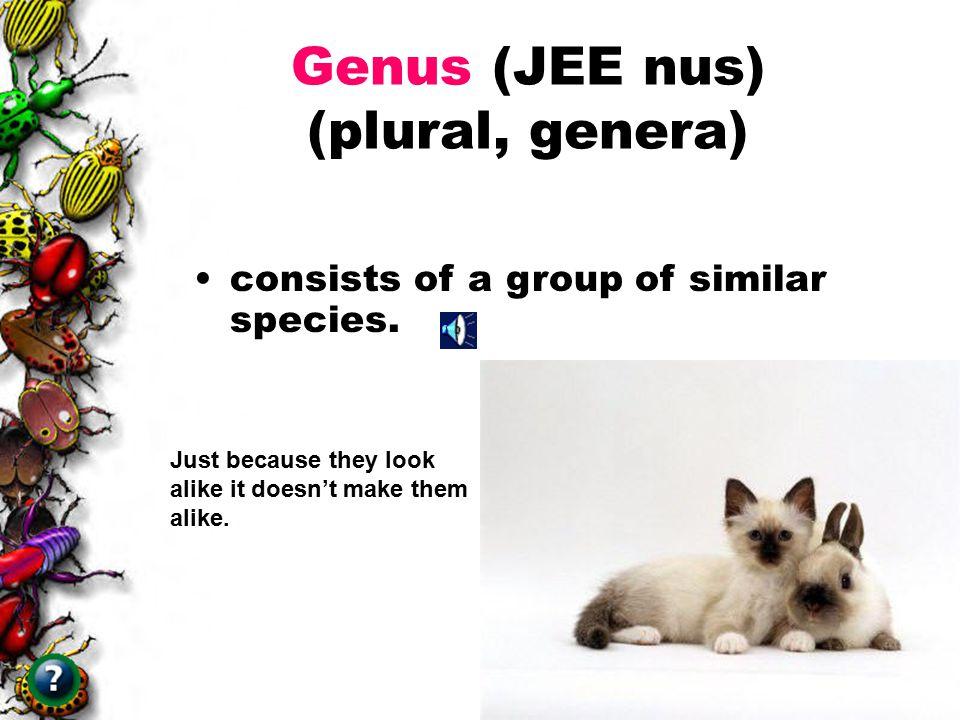 Genus (JEE nus) (plural, genera)