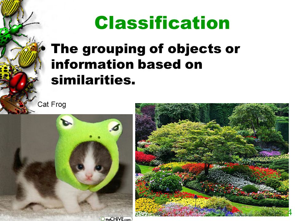 Classification The grouping of objects or information based on similarities. Cat Frog
