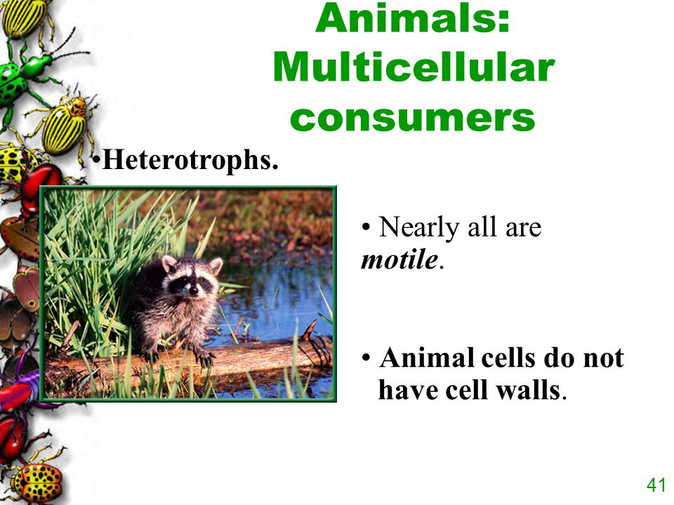 Animals: Multicellular consumers