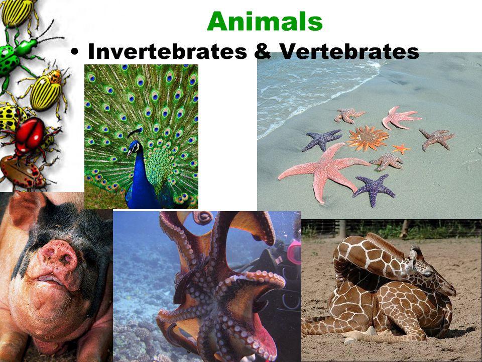Animals Invertebrates & Vertebrates