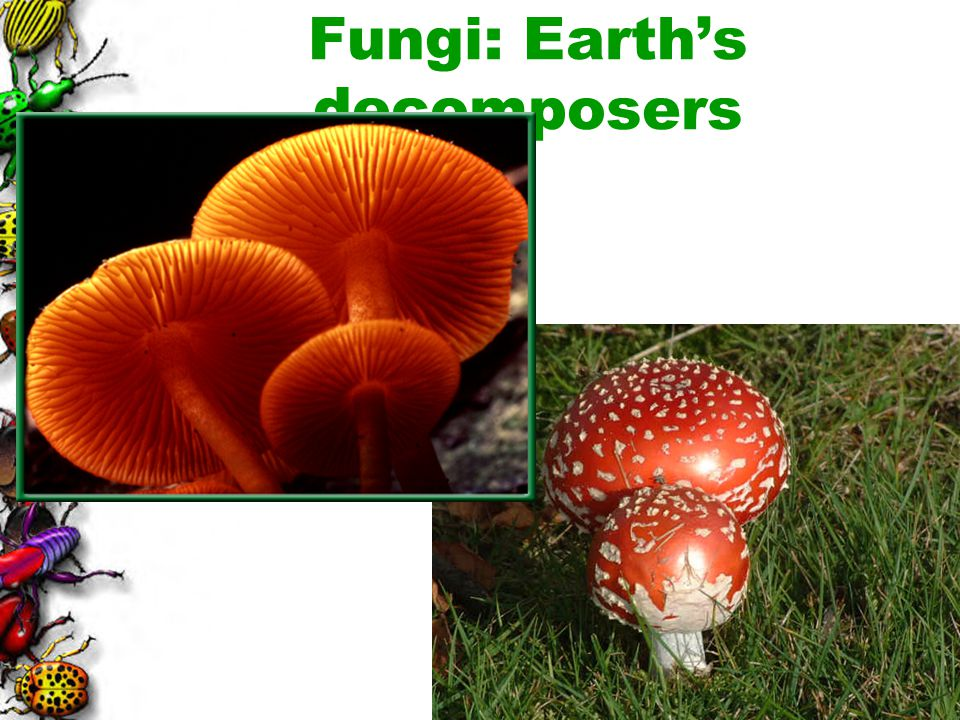 Fungi: Earth's decomposers