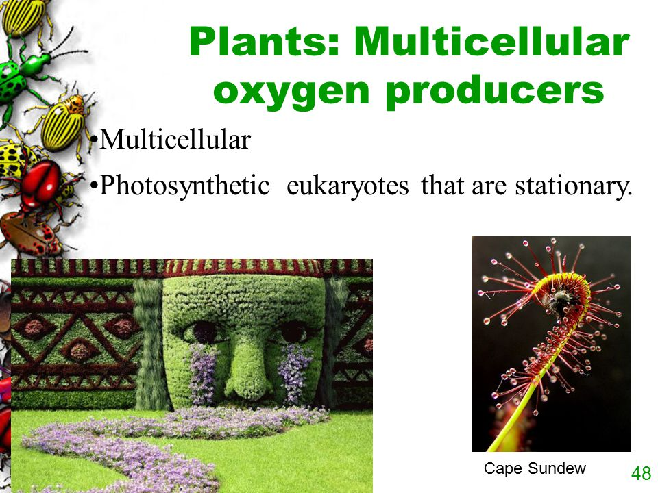 Plants: Multicellular oxygen producers