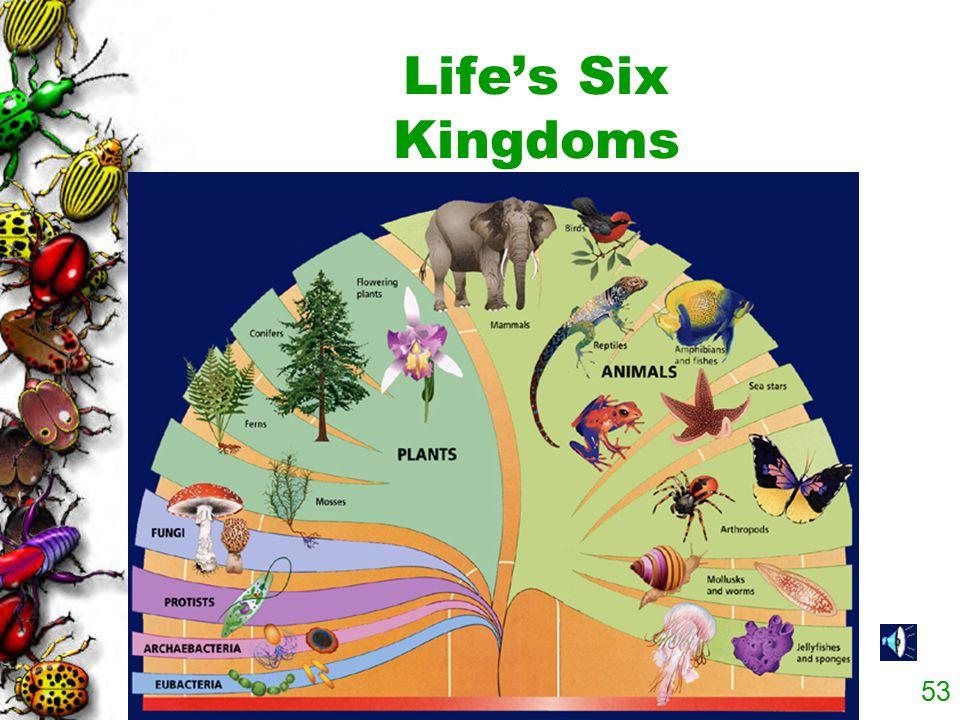 Life's Six Kingdoms