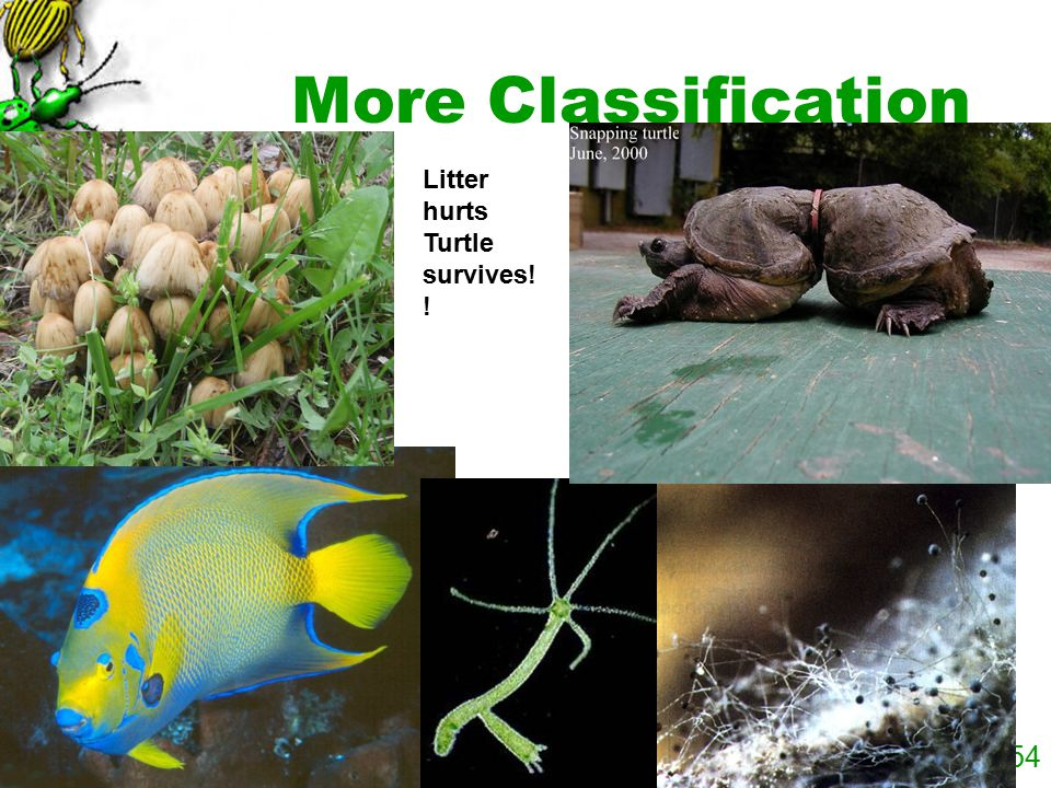 More Classification Litter hurts Turtle survives!!