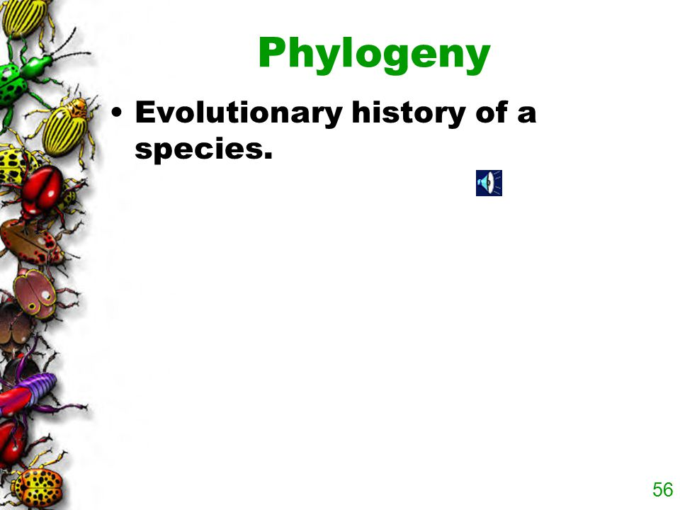 Phylogeny Evolutionary history of a species.