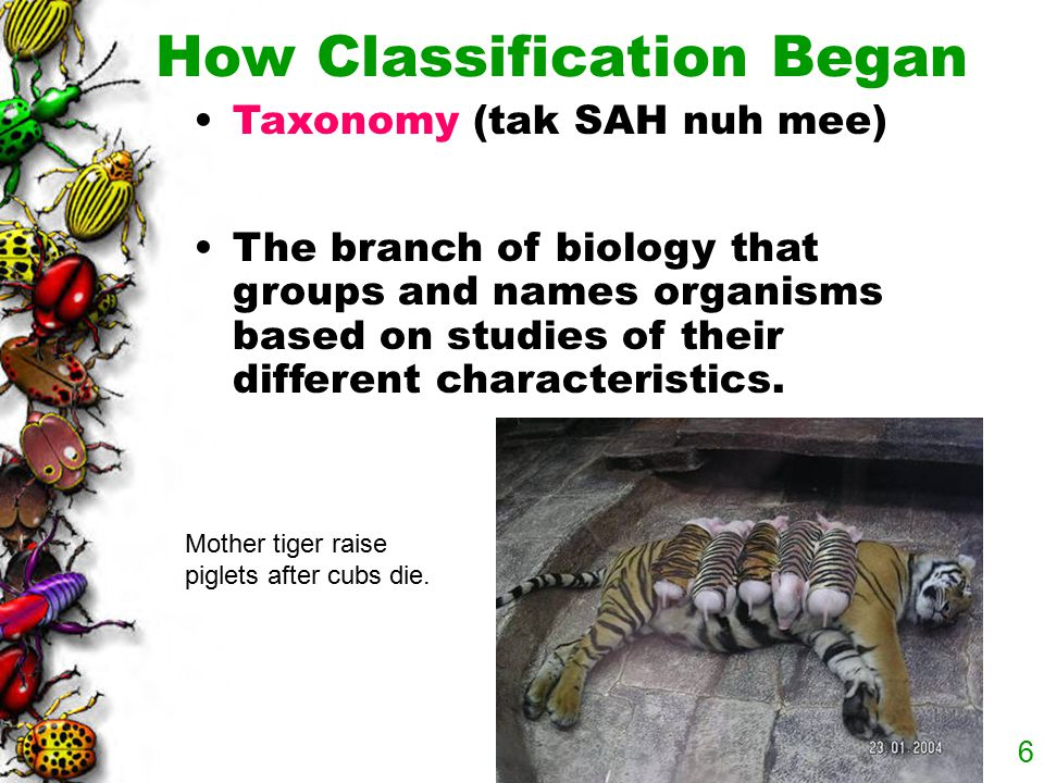 How Classification Began