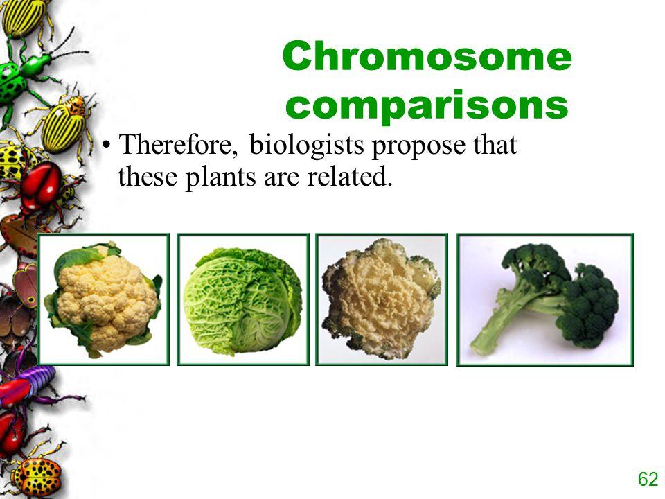 Chromosome comparisons