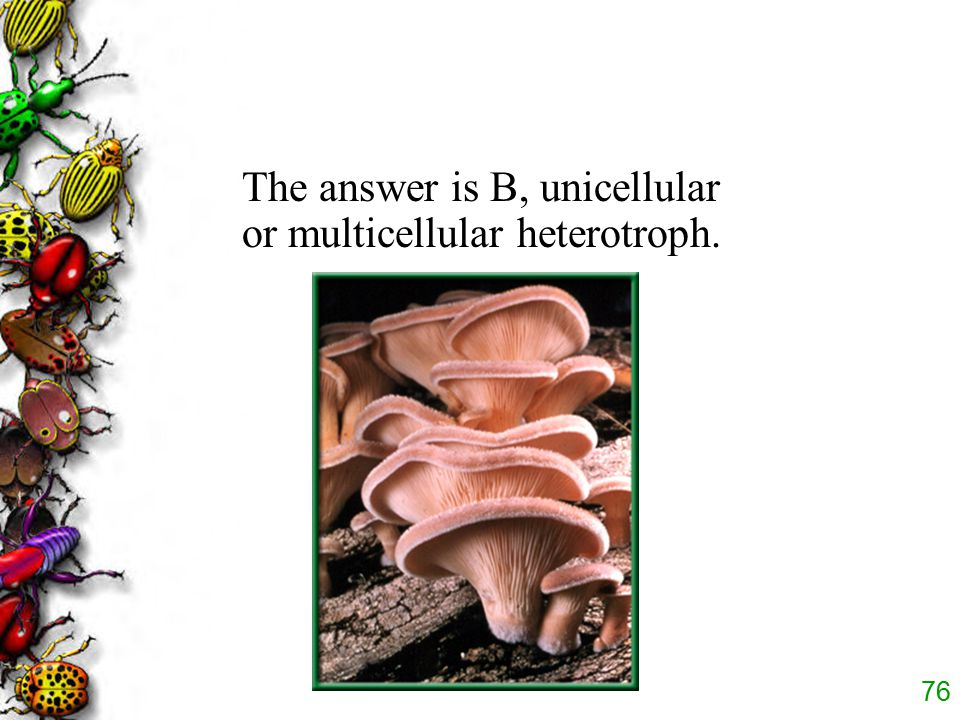 The answer is B, unicellular or multicellular heterotroph.