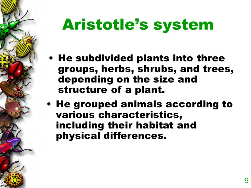 Aristotle's system He subdivided plants into three groups, herbs, shrubs, and trees, depending on the size and structure of a plant.