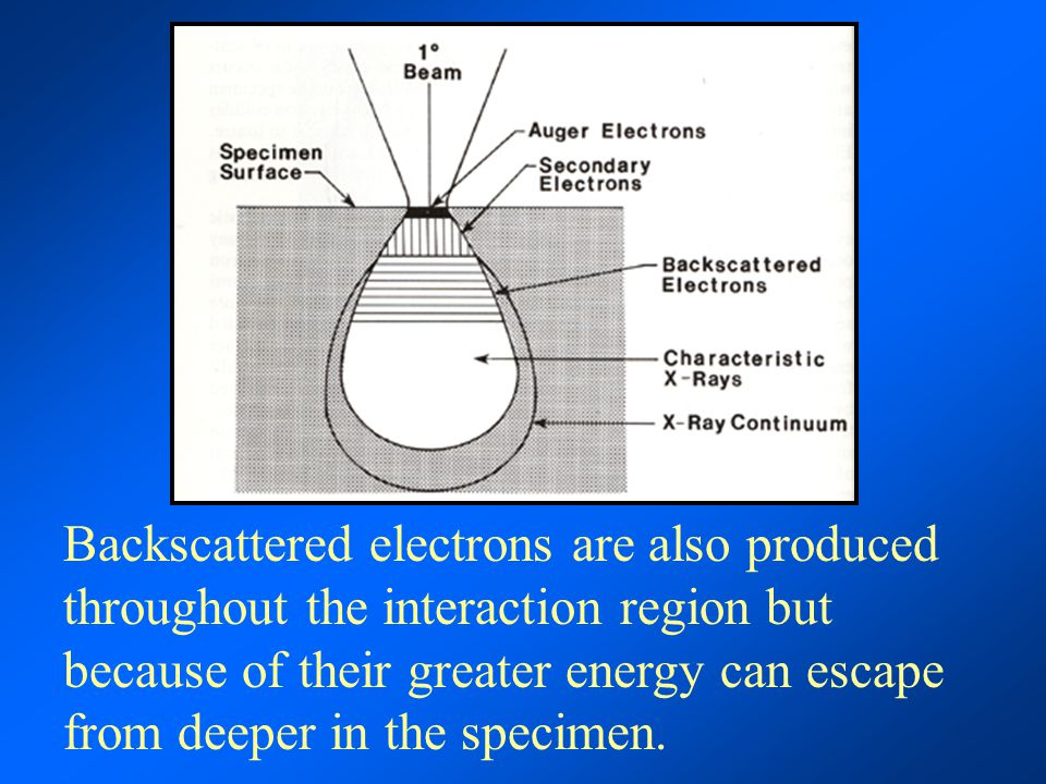 Backscattered electrons are also produced throughout the interaction region but because of their greater energy can escape from deeper in the specimen.