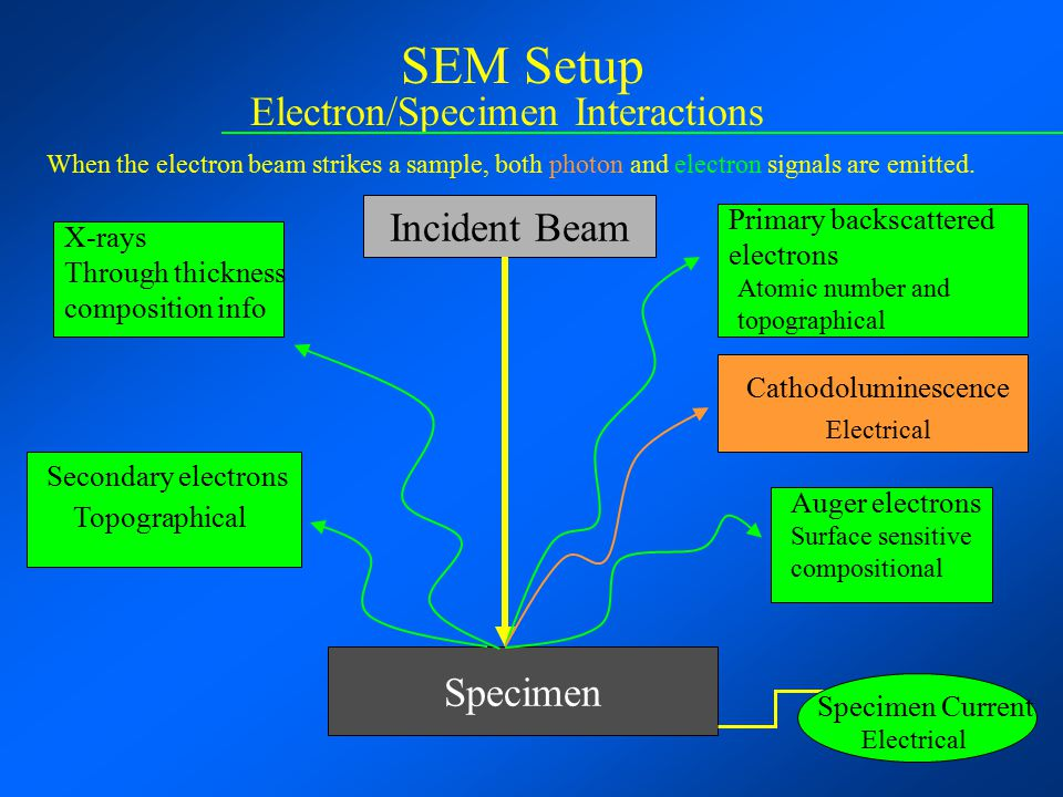 SEM Setup Electron/Specimen Interactions Incident Beam Specimen