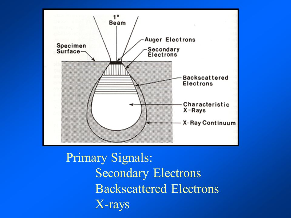 Primary Signals: Secondary Electrons Backscattered Electrons X-rays