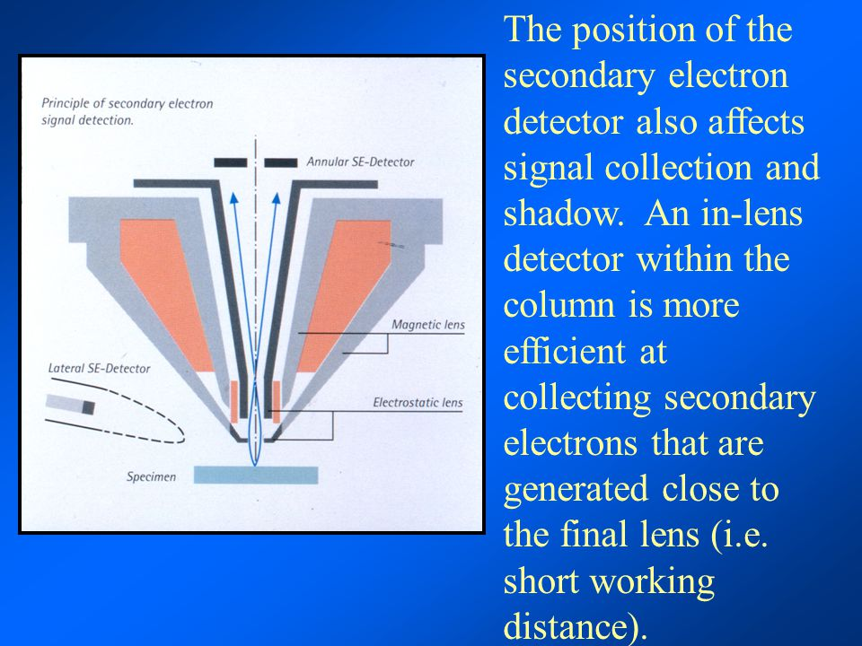 The position of the secondary electron detector also affects signal collection and shadow.