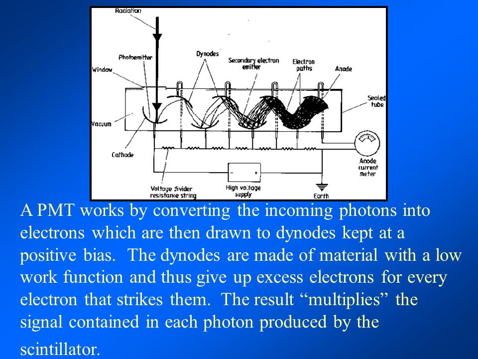 A PMT works by converting the incoming photons into electrons which are then drawn to dynodes kept at a positive bias.