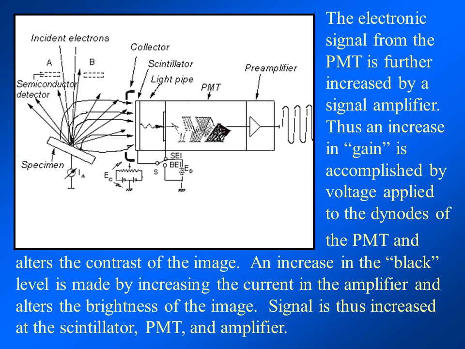 The electronic signal from the PMT is further increased by a signal amplifier. Thus an increase in gain is accomplished by voltage applied to the dynodes of the PMT and