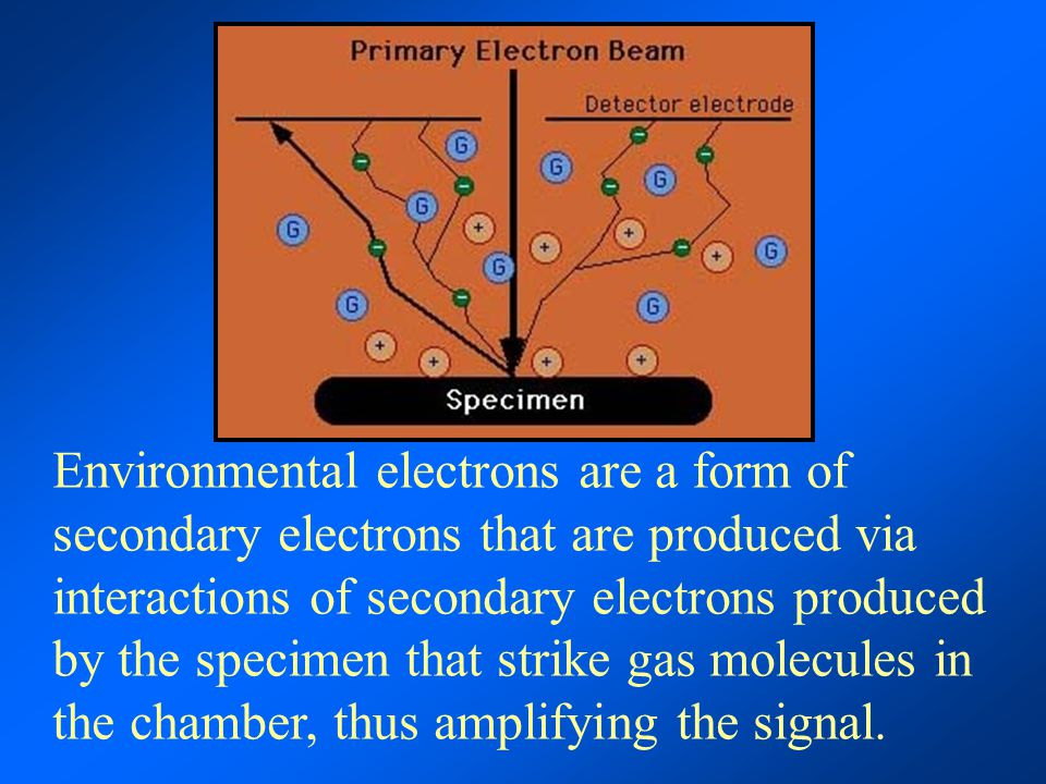Environmental electrons are a form of secondary electrons that are produced via interactions of secondary electrons produced by the specimen that strike gas molecules in the chamber, thus amplifying the signal.