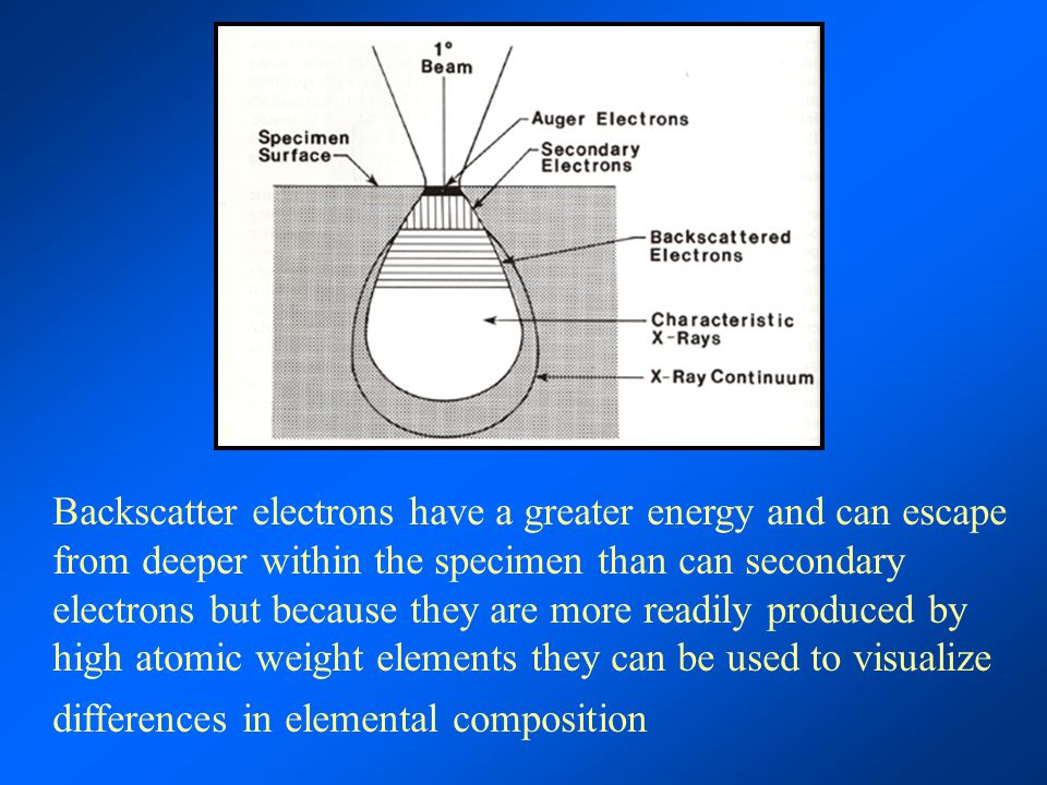 Backscatter electrons have a greater energy and can escape from deeper within the specimen than can secondary electrons but because they are more readily produced by high atomic weight elements they can be used to visualize differences in elemental composition