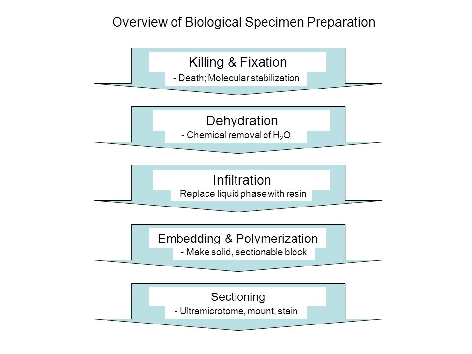 Overview of Biological Specimen Preparation