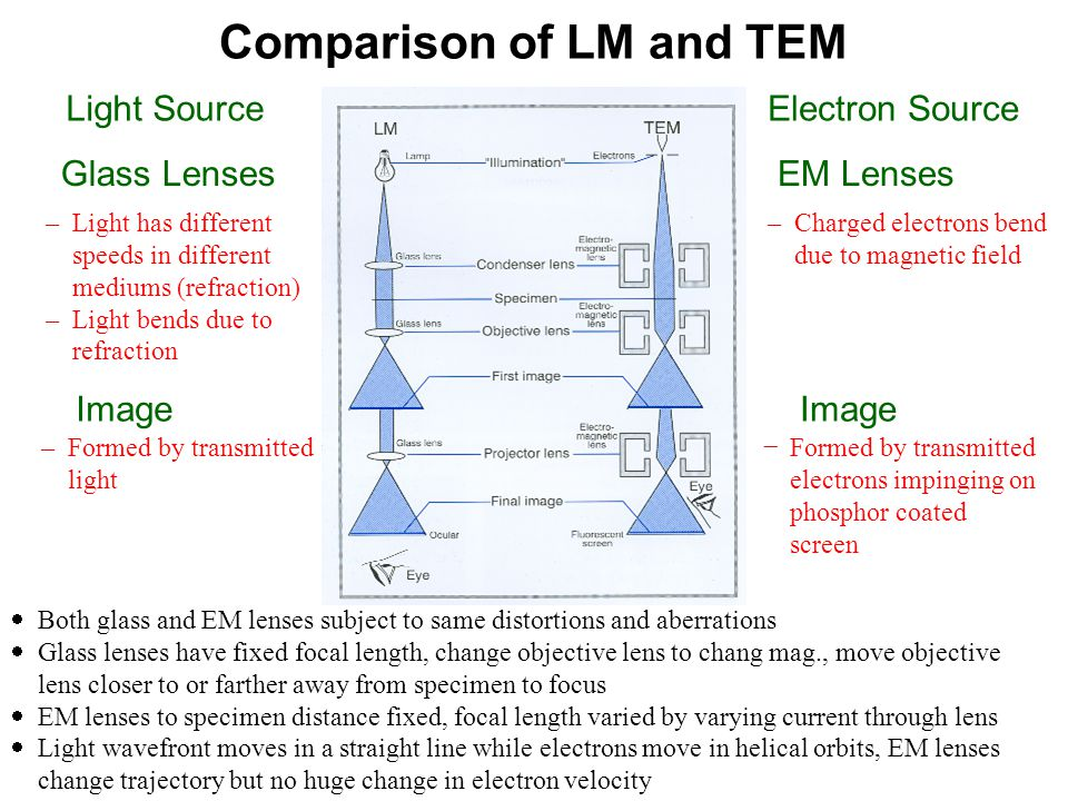 Comparison of LM and TEM