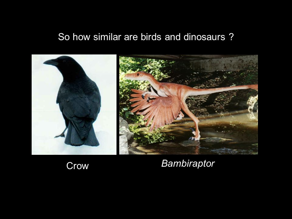 So how similar are birds and dinosaurs