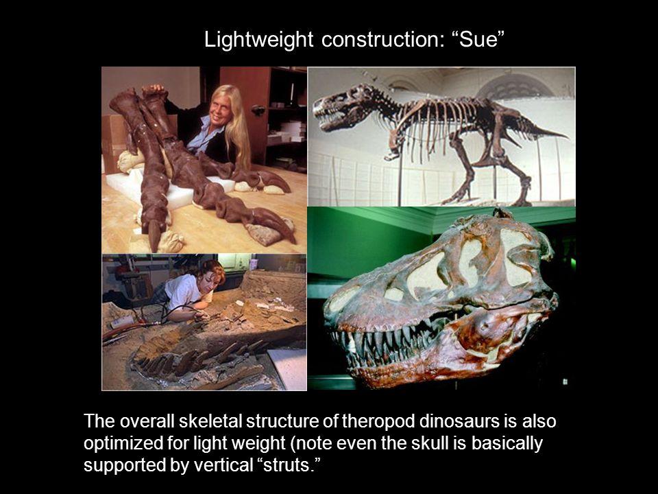 Lightweight construction: Sue
