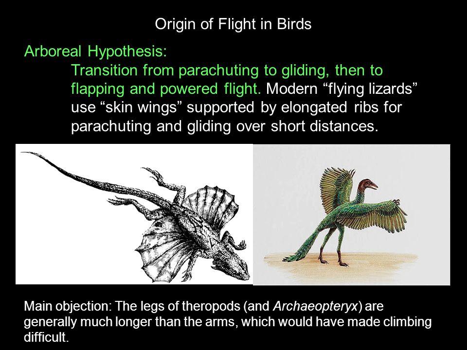 Origin of Flight in Birds