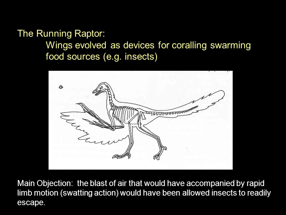 Wings evolved as devices for coralling swarming