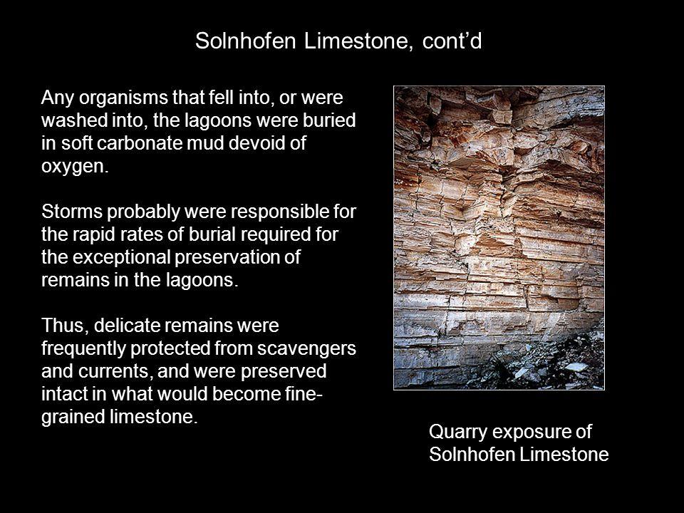 Solnhofen Limestone, cont'd