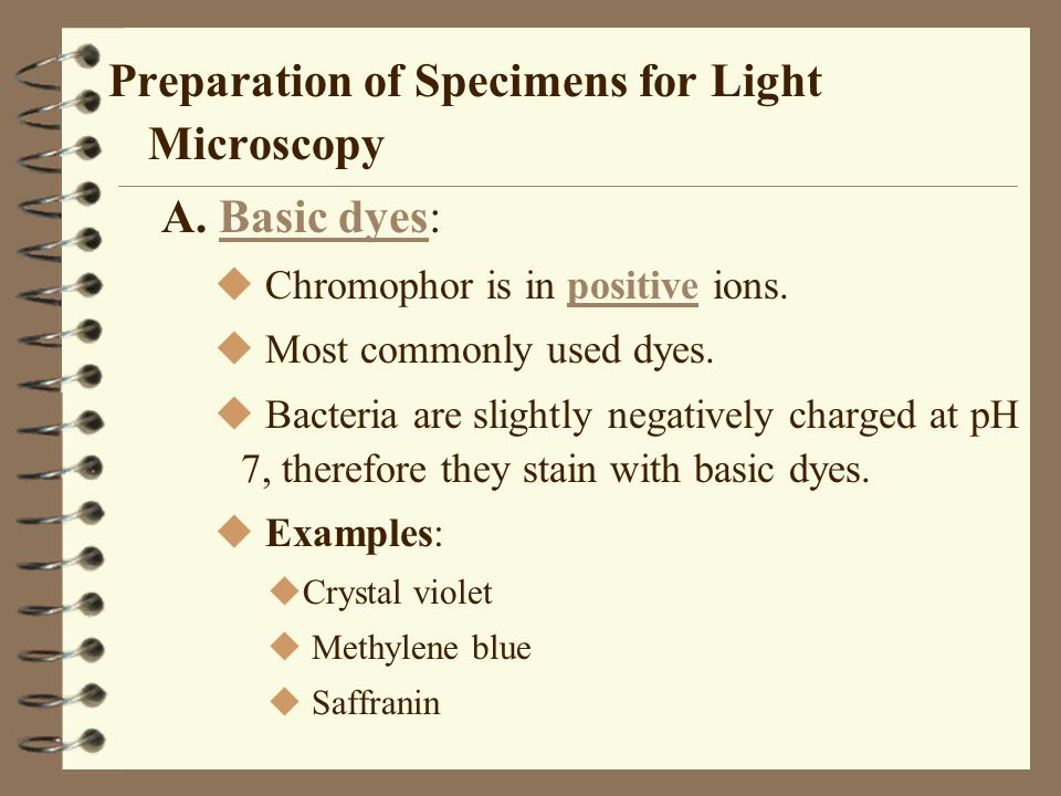 Preparation of Specimens for Light Microscopy A. Basic dyes:
