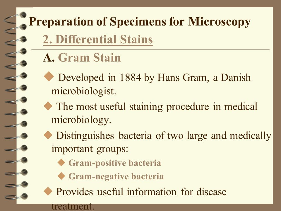 Preparation of Specimens for Microscopy 2. Differential Stains