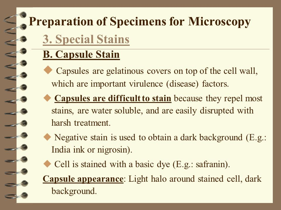 Preparation of Specimens for Microscopy 3. Special Stains