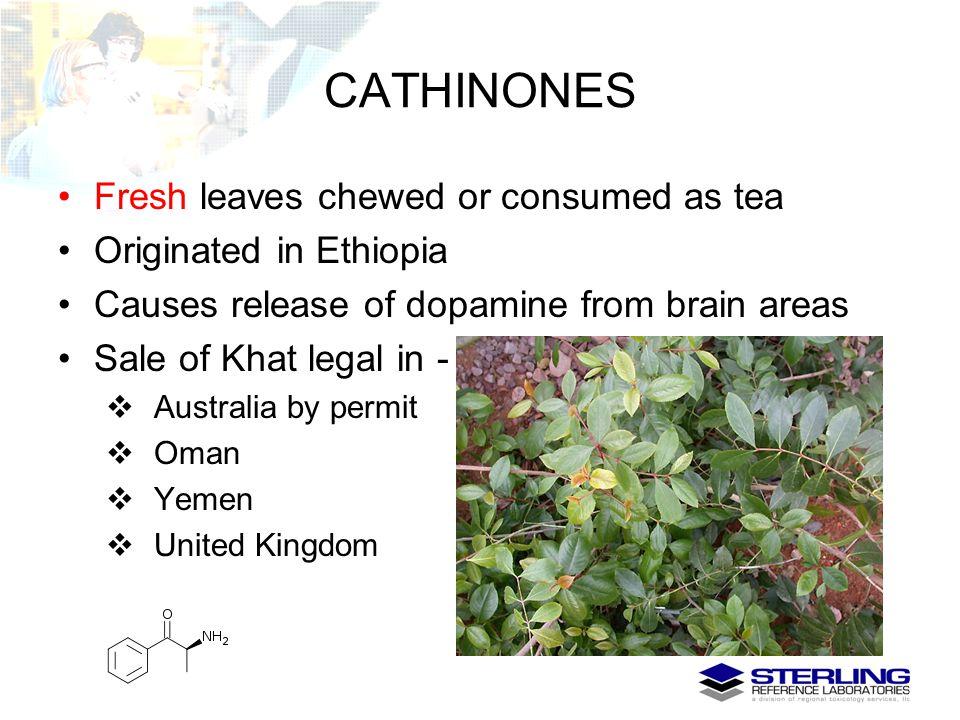 CATHINONES Fresh leaves chewed or consumed as tea