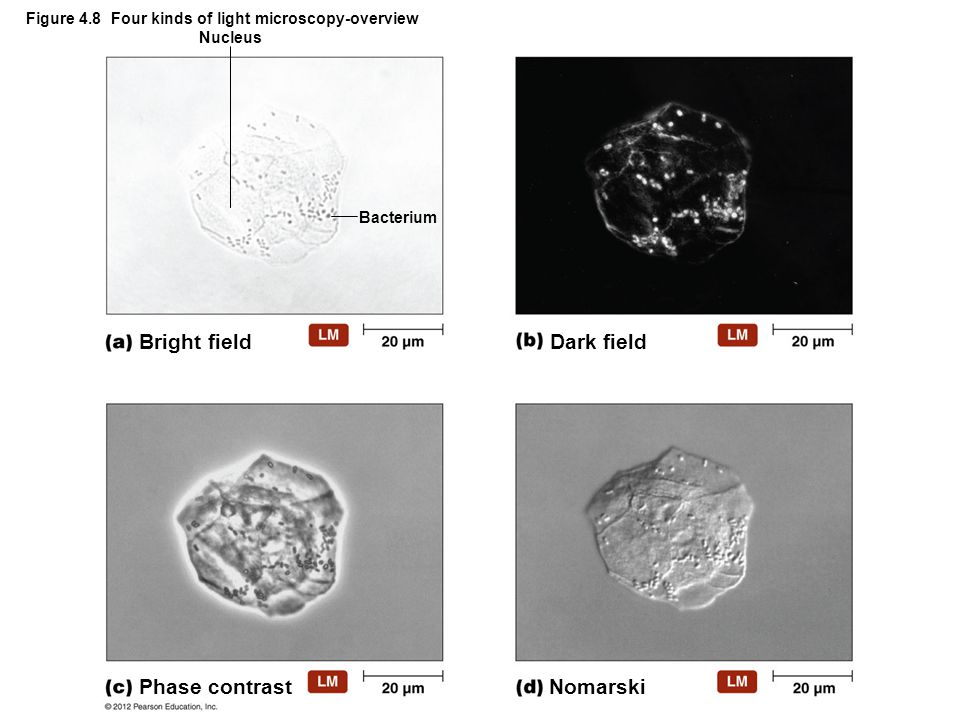 Figure 4.8 Four kinds of light microscopy-overview