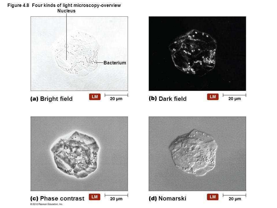 Figure 4.8 Four kinds of light microscopy-overview