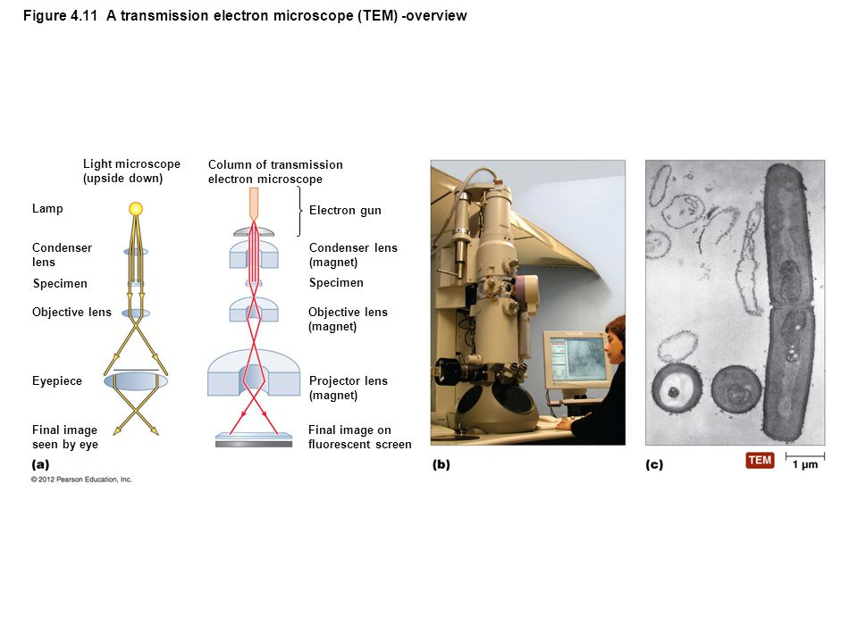 Figure 4.11 A transmission electron microscope (TEM) -overview