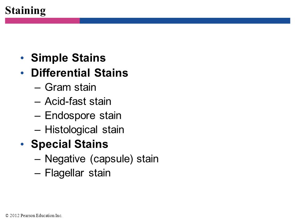 Staining Simple Stains Differential Stains Special Stains Gram stain