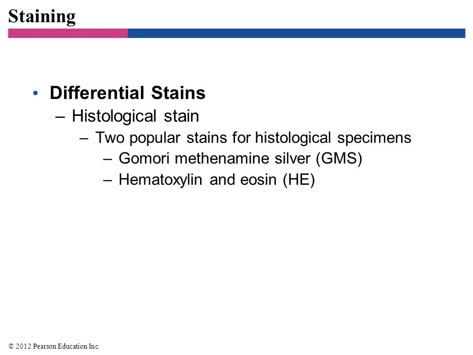 Staining Differential Stains Histological stain