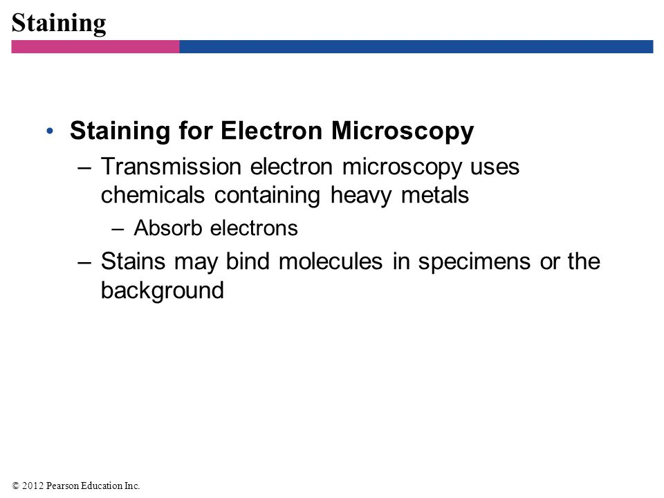 Staining Staining for Electron Microscopy