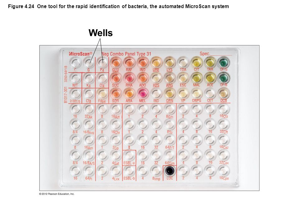 Figure 4.24 One tool for the rapid identification of bacteria, the automated MicroScan system