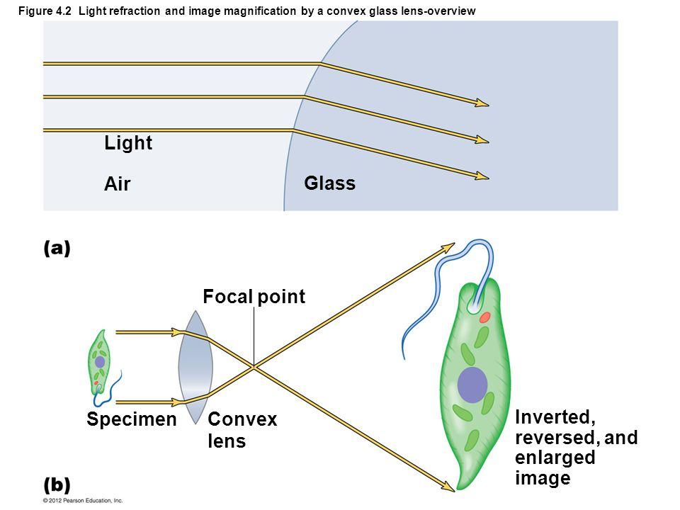 Light Air Glass Focal point Specimen Convex lens Inverted,
