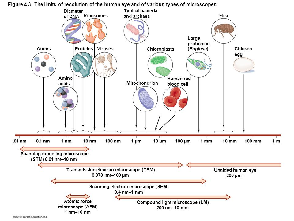 Figure 4.3 The limits of resolution of the human eye and of various types of microscopes