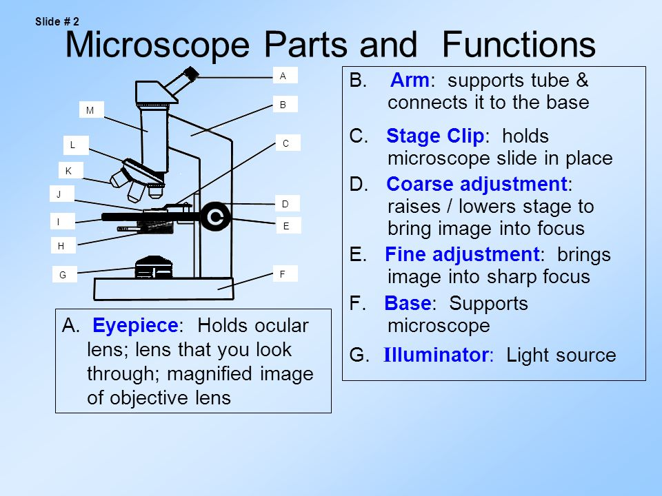 Parts of the compound light microscope ppt download microscope parts and functions ccuart Gallery