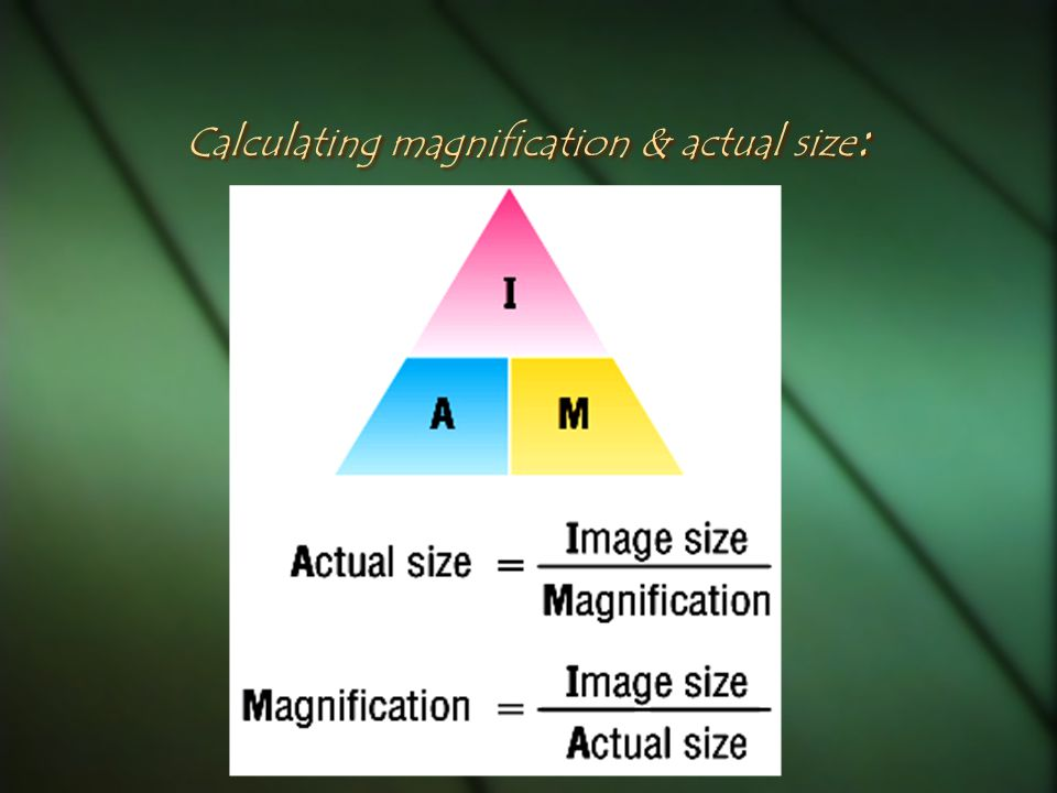 Calculating magnification & actual size: