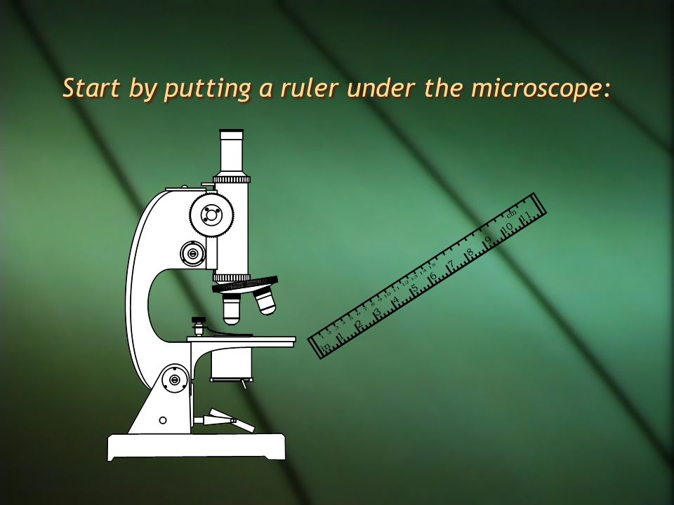 Start by putting a ruler under the microscope:
