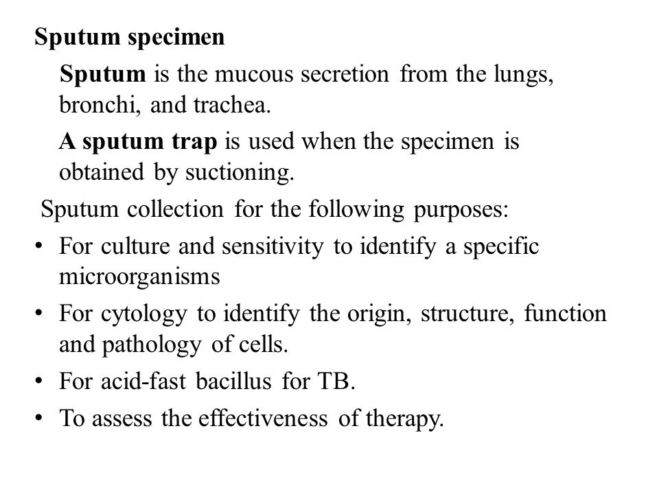 Sputum specimen Sputum is the mucous secretion from the lungs, bronchi, and trachea.