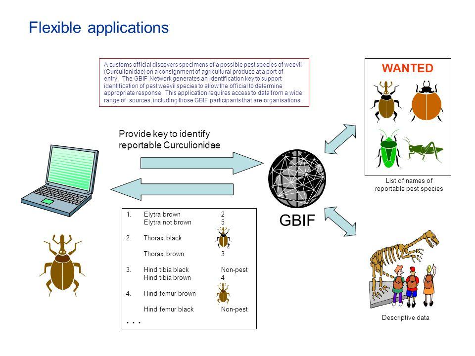 Flexible applications
