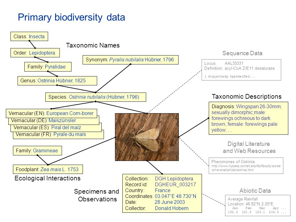 Primary biodiversity data