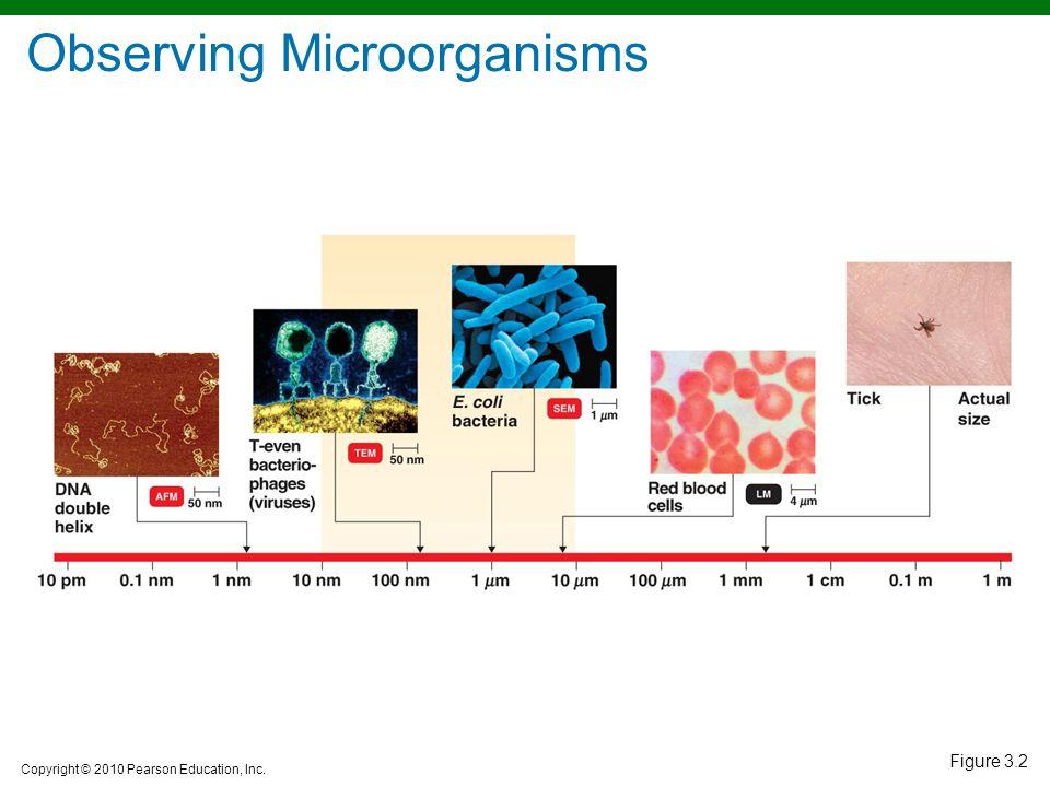 Observing Microorganisms